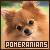 dogs: pomeranians
